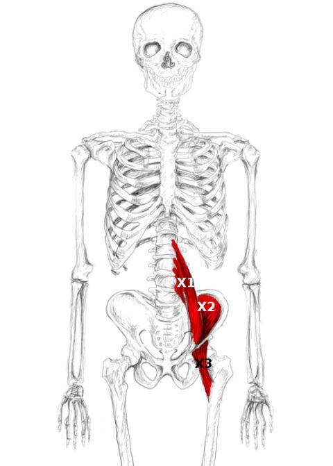 Músculo iliopsoas: Autotratar dolor y puntos gatillo